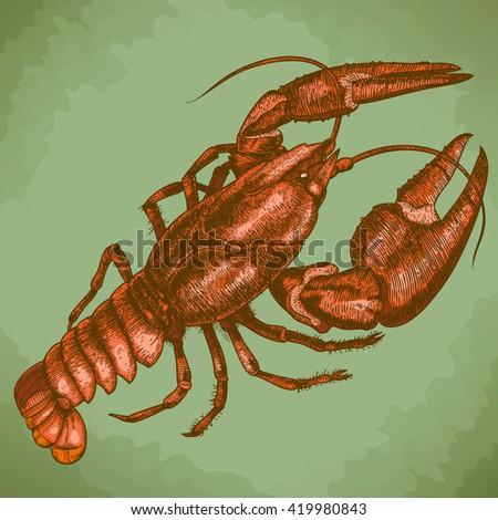 antique engraving woodcut illustration of one crayfish in retro style - stock photo