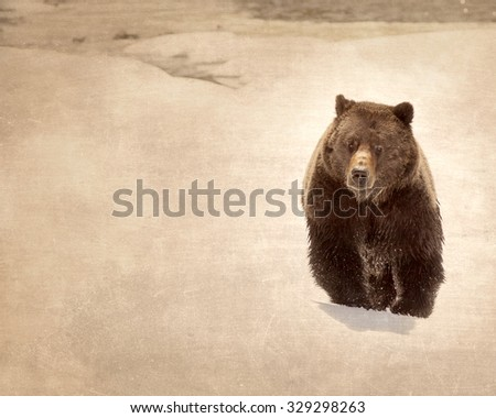 Antique Grizzly Bear in Snow - stock photo