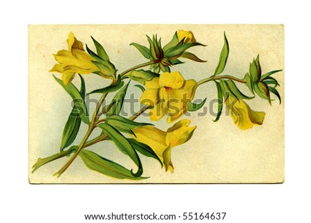 Antique postcard front yellow flowers - stock photo