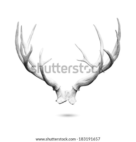 Antler replicas, made of cement, isolated on white background with clipping path. - stock photo