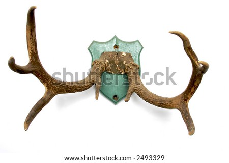 antlers mounted on an old plaque - stock photo