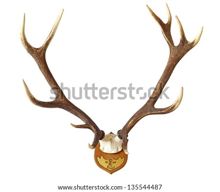 Antlers of a huge stag, hunted in 1888 - stock photo