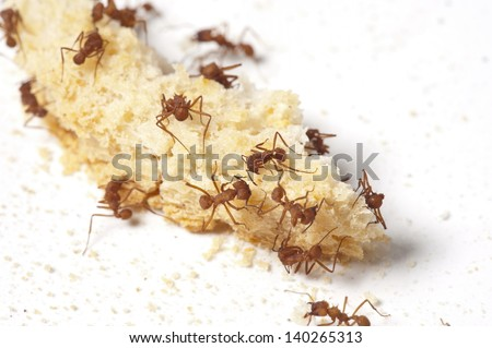 Ants attacking food crumbs - stock photo