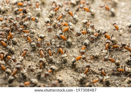 Ants Colony Looking For Food - stock photo