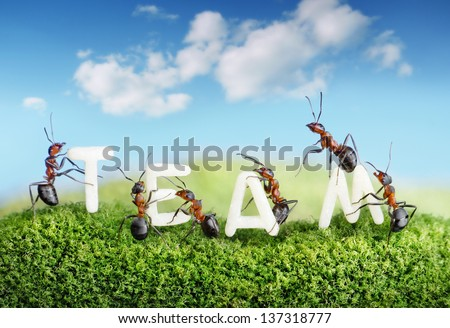 ants constructing word team with letters, teamwork concept - stock photo