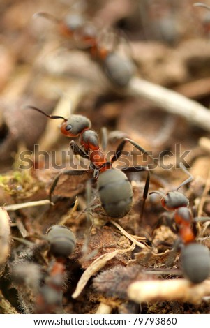 Ants in the forest - stock photo