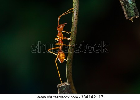Ants, insects, animals. - stock photo