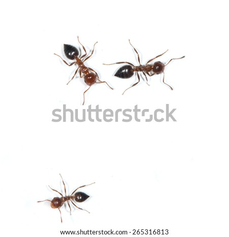 ants on a white background - stock photo