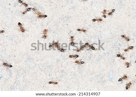 ants on the wall. close-up - stock photo