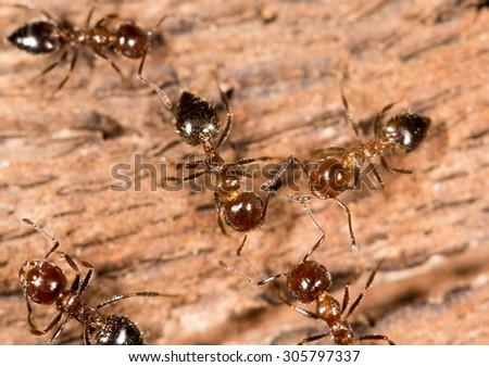 White Ants White Ants On Wood