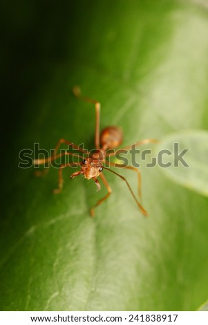 Ants walking on the leaf. - stock photo