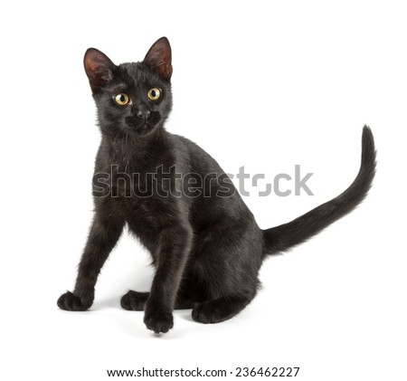 anxious black cat on white background - stock photo