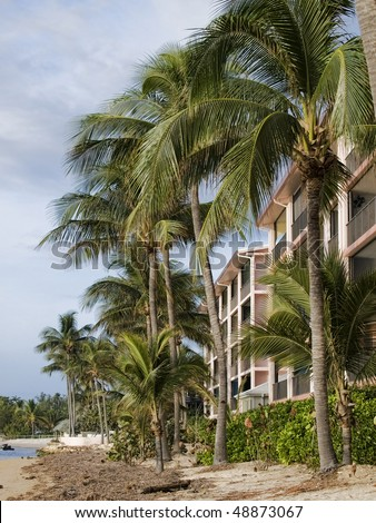 Apartment building on the beach at dawn on Key West. Beautiful Royal Palms in front of the building - stock photo