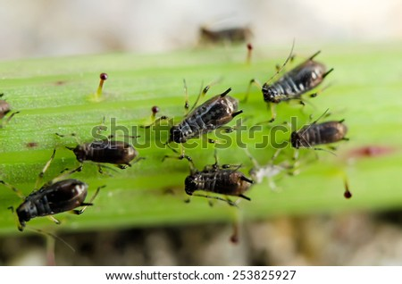 aphids on a leaf - stock photo