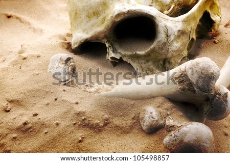 apocalypse concept skull and bones abstrarct background - stock photo