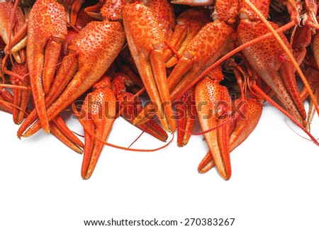 appetizing red boiled crawfish on a white background - stock photo