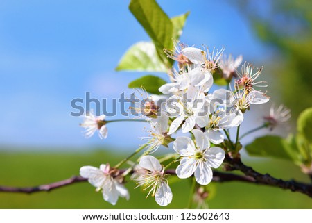 Trees spring Stock Photos, Images, & Pictures