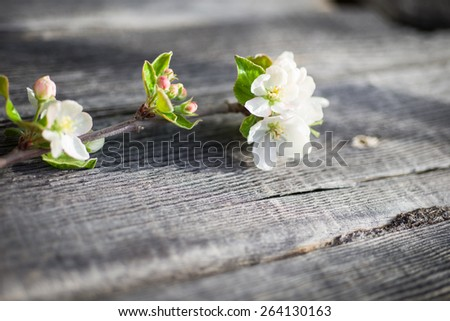 Apple blossom against wooden background - focus on buds - stock photo