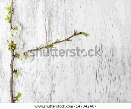 Apple blossom on wooden background. Copy space. - stock photo