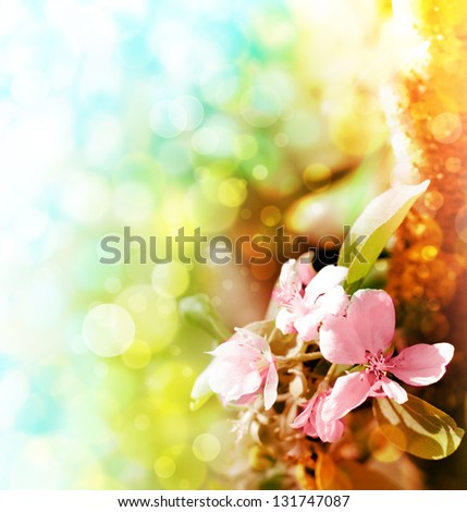 Apple blossoms over blurred nature background/ Spring flowers/Spring Background with bokeh - stock photo