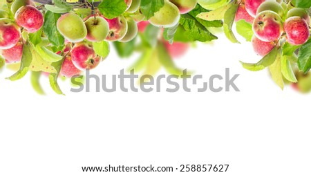 Apple branch with apples and leaves, banner for website, isolated on white background - stock photo
