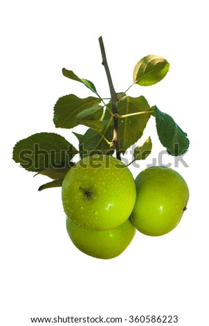 Apple branch with water drops isolated on white background - stock photo