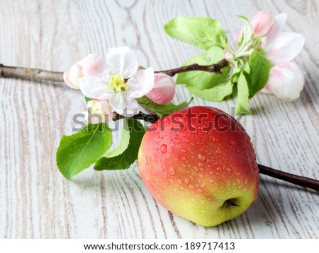 apple flowers and ripe red apples on a wooden background - stock photo