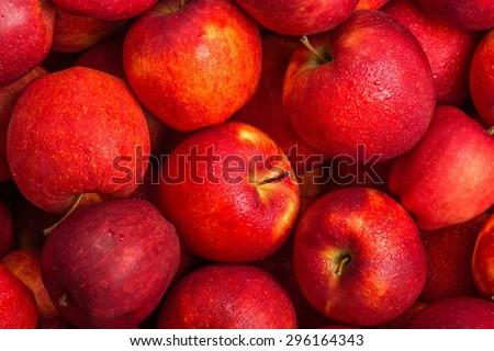 Apple, Fruit, Autumn. - stock photo