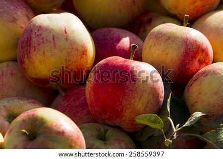 apple,	garden,	fruit,	harvest, basket,	wicker,	round,	food, natural,	leaves,	ripe,	juicy, delicious,	light,	shadow,	sun, yellow,	green,	fall,	pink - stock photo