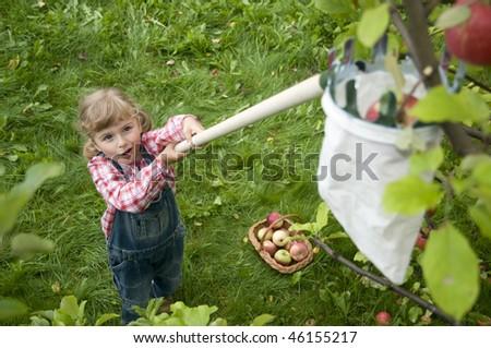 Apple harvest - stock photo