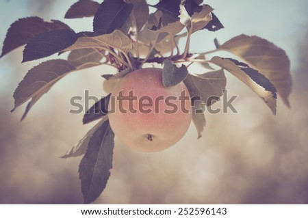 Apple on a Tree in a Vintage Film Style - stock photo
