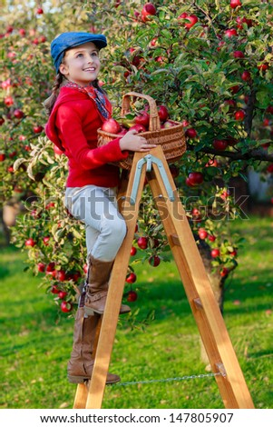 Apple orchard - beautiful girl picking red apples into the basket - stock photo