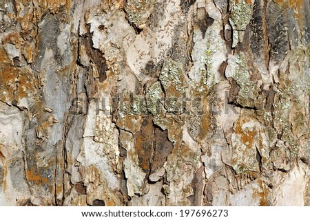Apple Tree Bark Texture  - stock photo