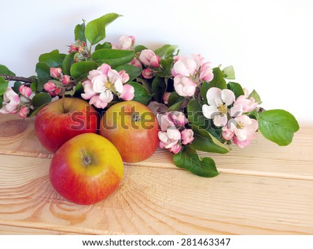 Apple tree branch with blossoms and ripe apples on wooden table white background        - stock photo