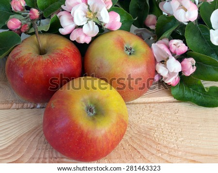Apple tree branch with blossoms and three ripe apples on wooden table white background close up - stock photo