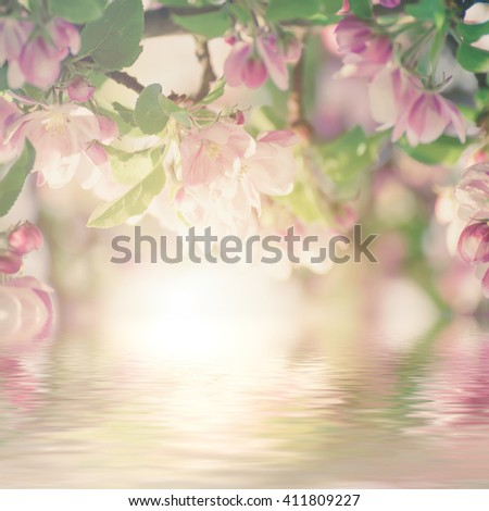Apple tree flower blossoming at spring time, floral sunny vintage natural background with water reflection - stock photo