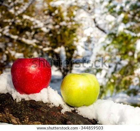 Apples in snow - stock photo