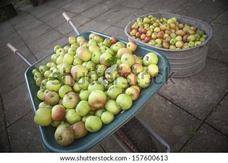 Apples in Wheelbarrow and Steel Bath - stock photo