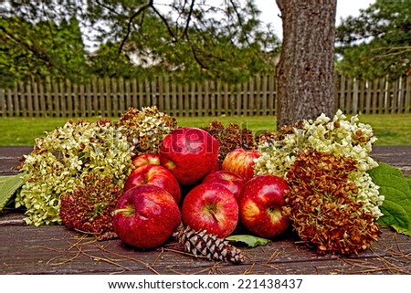 Apples piled up on table outside with dried hydrangeas surrounding along with tiny pine cones and other plants. - stock photo