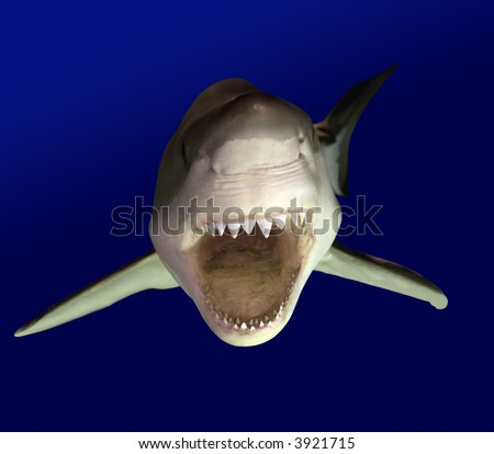 Approaching Great White Shark, known as a white pointer shark. - stock photo