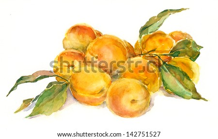Apricots. Still life. Watercolor painting. - stock photo