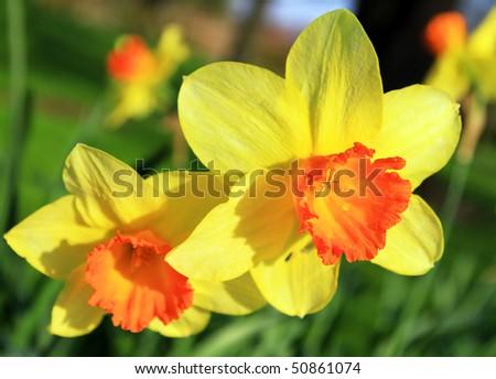 April flowers - stock photo