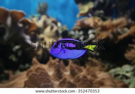 aquarium - stock photo