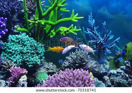 Aquarium corals reef - stock photo