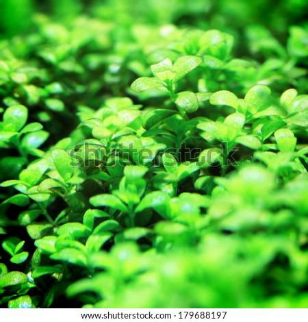 Aquarium Plants Stock Photos, Images, & Pictures Shutterstock