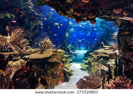 Aquarium with plants and tropical colorful fishes - stock photo