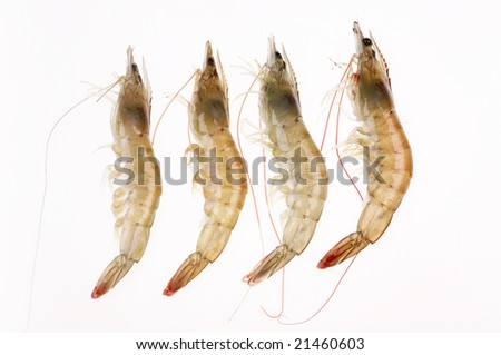 Aquatic product of shrimps on the white background. - stock photo