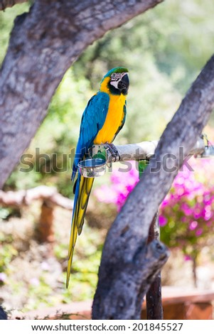 ara parrot seating - stock photo