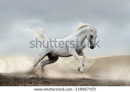 arab horse in desert - stock photo
