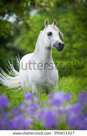 Arabian gray horse standing in forest - stock photo